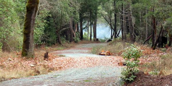 laytonville-road-scene-landing